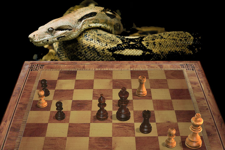 Komodo MCTS: the boa constrictor approach | ChessBase