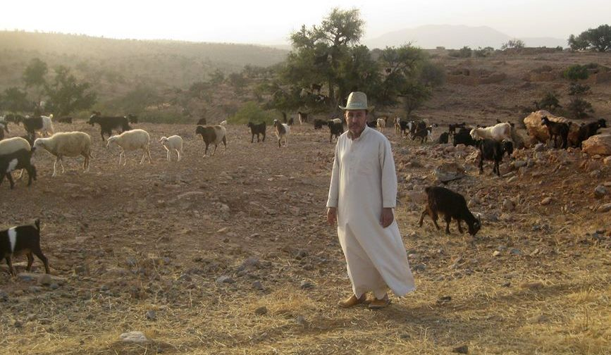 Boukdeir and goats